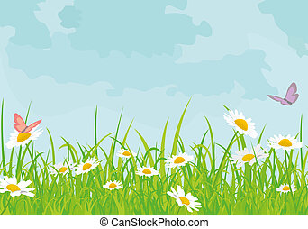 daisy background - beautiful background with daisies sky...