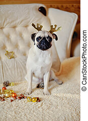 Pug on a holiday
