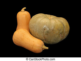 Isolated Butternut Squashes and Pumpkin - Isolated Picture...