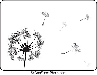 Dandelion vector silhouette - Indian summer. Dandelion...