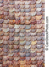 Scallops shell background
