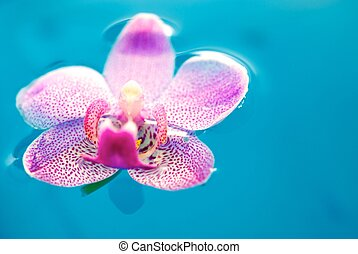 Beautiful orchid flower and clean blue water