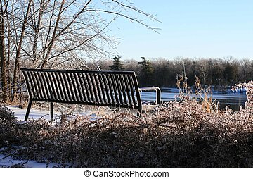 winter bench - sunlit winter bench flowers at bottom are...