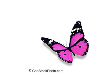 Violet butterfly on white background - Violet butterfly,...