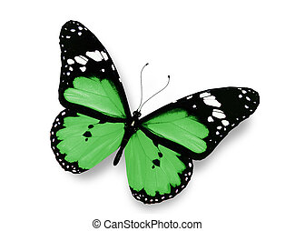 Green butterfly, isolated on white