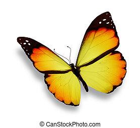 laranja, borboleta, isolado, branca