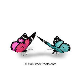 Cor-de-rosa, azul, borboleta, isolado, branca, fundo