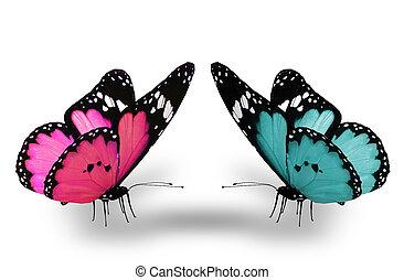 Cor-de-rosa, azul, borboleta, isolado, branca