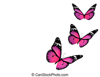 Three violet butterflies, isolated on white background