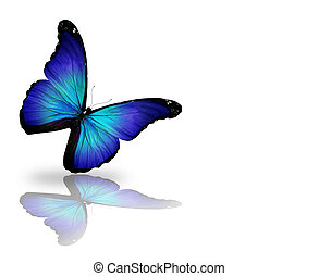 Dark blue butterfly, isolated on white background