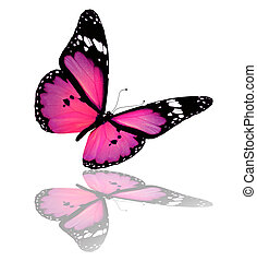 Pink-violet butterfly, isolated on white