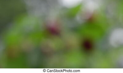 twig raspberry move wind - Closeup focus of natural twig...