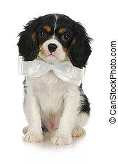 handsome puppy