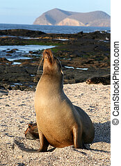Female Sea Lion - A female Sea Lion on the beach of the...