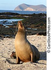 Female Sea Lion - A female Sea Lion on the beach of the...
