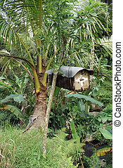 Beehive on the palm tree in Bali