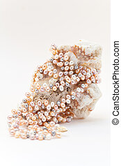 Pearl jewellery - Pearl necklace on a coral