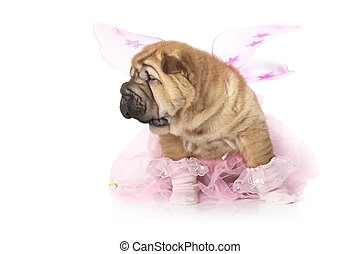 Chinese sharpei Puppy dog dressed up like a fairy