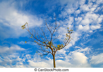 Trees with blue sky in worm eye view