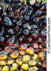 Palm oil fruit - Close up photography of palm oil fruit