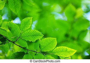 nature - green leaves background in sunny day