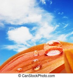 Orange flower petals with water drops on it over blue sky
