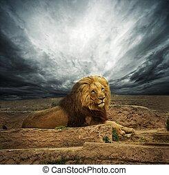 africano, Leão, deserto