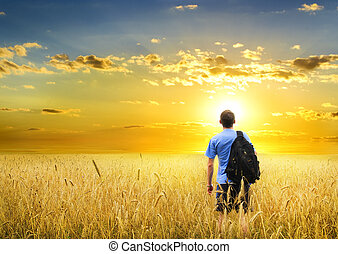 Man in yellow wheat meadow. - Man in yellow wheat meadow on...