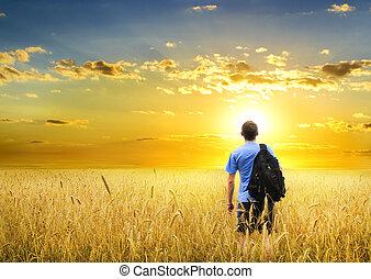 Man in yellow wheat meadow. - Man in yellow wheat meadow on...