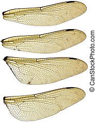 Dragonfly Wings Set - High resolution scan of a set of four...