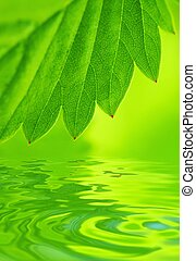 Green leaf reflected in water