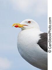 Sea gull along the coast of the northsea