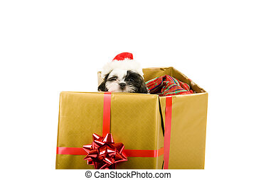 Santa Pup Christmas - One cute little Shih Tzu puppy looks...