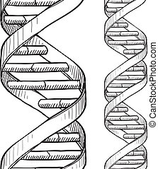 Seamless DNA double helix pattern - Doodle style DNA double...