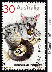 Postage stamp Australia 1974 Common Brushtail Possum -...