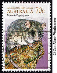 Postage stamp Australia 1990 Common Brushtail Possum -...