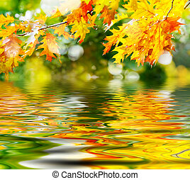 leaves - Colorful autumn leaves reflecting in the water