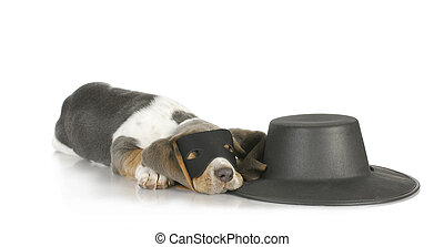 zorro - dog zorro - basset hound dressed up in disguise like...