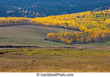 Fence Lines Leading to Aspens