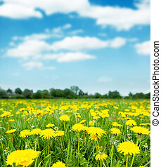 dandelions - Spring field with dandelions on bright sunny...