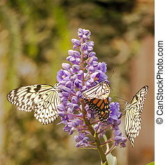 Butterfly flying around a flower, vertically