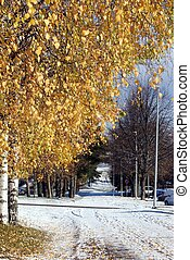 Yellow leaves and snow - Yellow leaves on a tree and snow on...