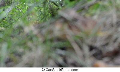 blur cep boletus mushroom