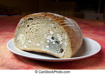 Mildew bread - Bread covered in fuzzy green and white mould