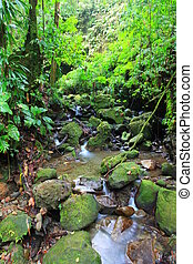 rain forest dominica - rain forest and stream