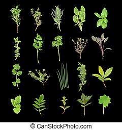 Herb Leaf Selection - Herb leaf selection over black...