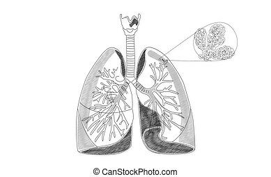 Human Lung structure