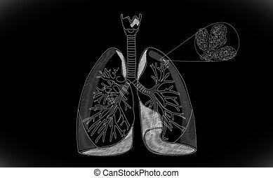 pulmão,  human, Estrutura