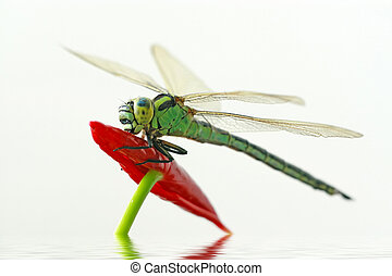 dragonfly - close up of dragonfly, take photos in the...