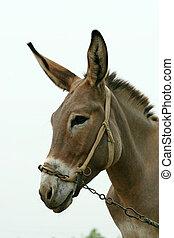 donkey in the fields